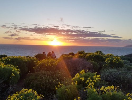 sunset with yellow wildflowers at Point Dume, Malibu, California